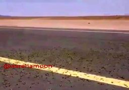 ویدئو/ حمله ملخها به جنوب سیستان