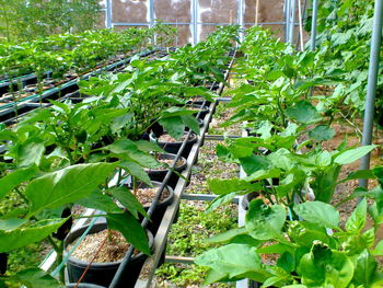 احتمال صادرات فرآورده های کشاورزی ارگانیک ایران به آمریکا