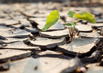 ابهام در خشکسالی بدون برگشت در ایران
