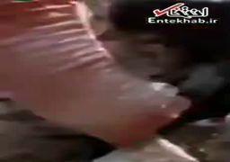 ویدئویی از شهدا و مجروحین حمله تروریستی اهواز